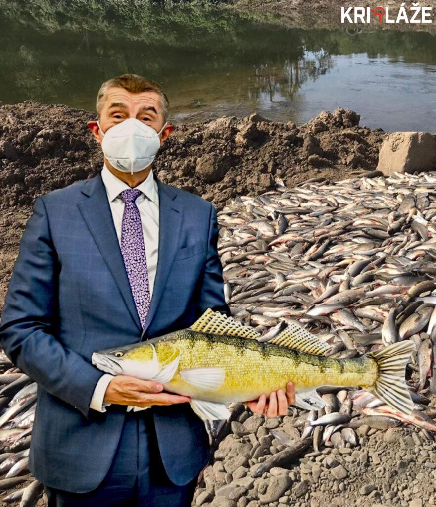 Babiš bečva ryby